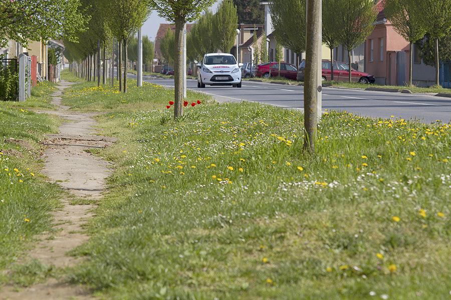 Odobreno 150.000 kn za sanaciju nogostupa u ulici Matije Gupca
