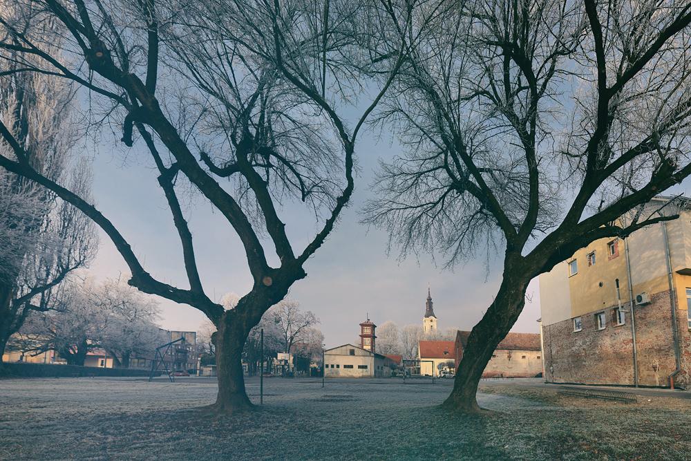 Kroz drveta dva