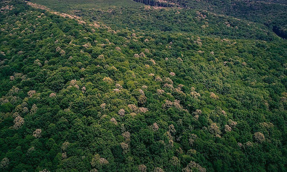 Virovitička šuma