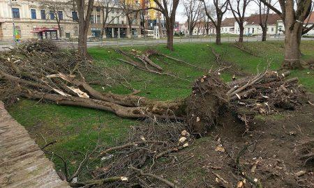 U Gradskom parku došlo do samourušavanja stabla